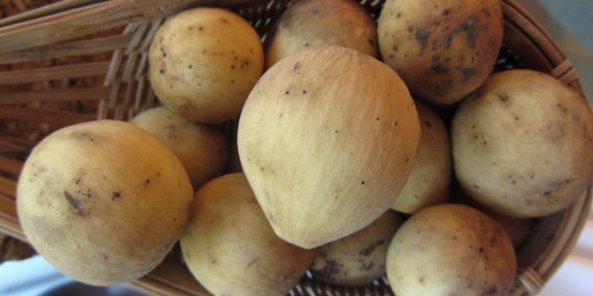 ini-khasiat-buah-duku-yang-jarang-diketahui